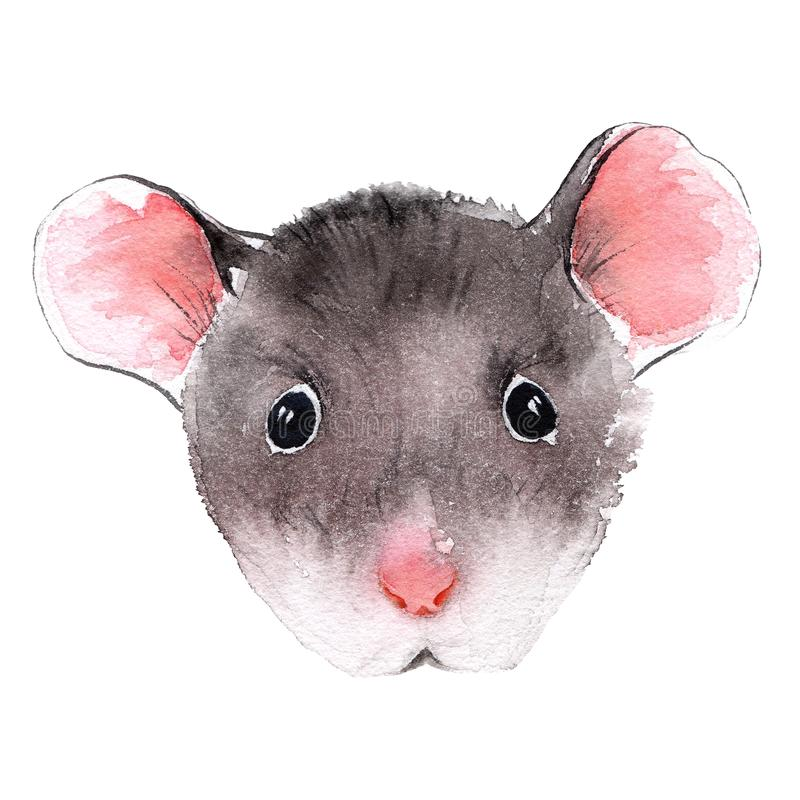 Wild rat. Mouse Chinese new year. Watercolor illustration. vector illustration