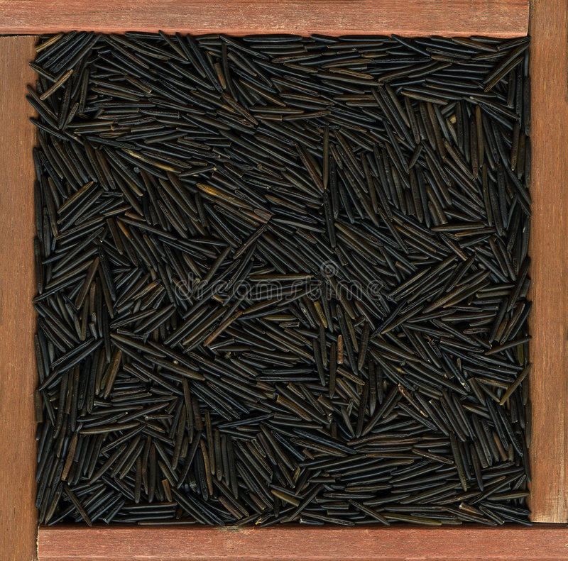 Wild rice background stock image