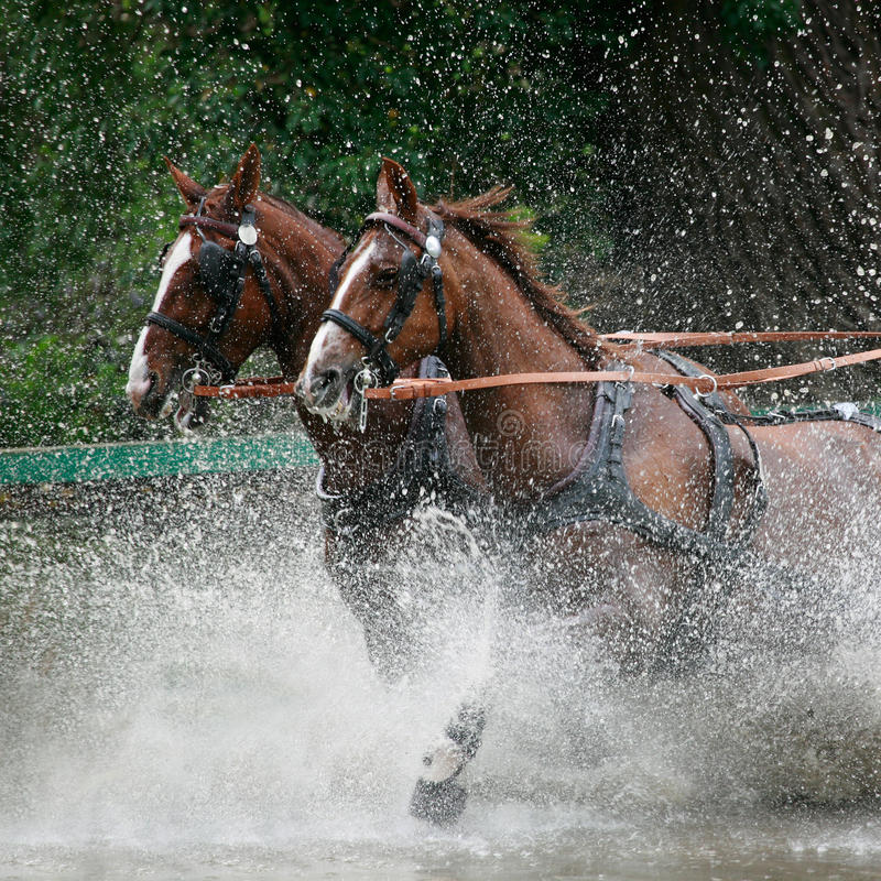 Wild ride splash royalty free stock photo