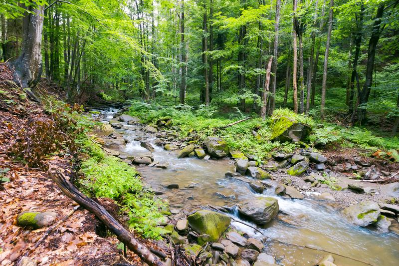 Wild river in ancient forest stock images