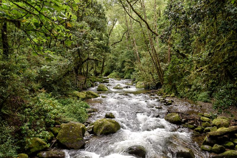 Wild river in the montains of Costa Rica. Wild river with rapids in the mountains in Costa Rica stock image