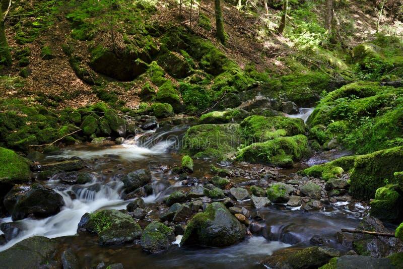 Wild river in the Ravennaschlucht in summer royalty free stock photo