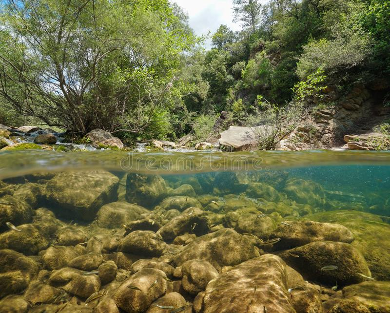 Wild river with rocks and fish underwater Spain. Wild river with rocks and fish underwater, split view half above and below water surface, La Muga, Girona, Alt stock photo