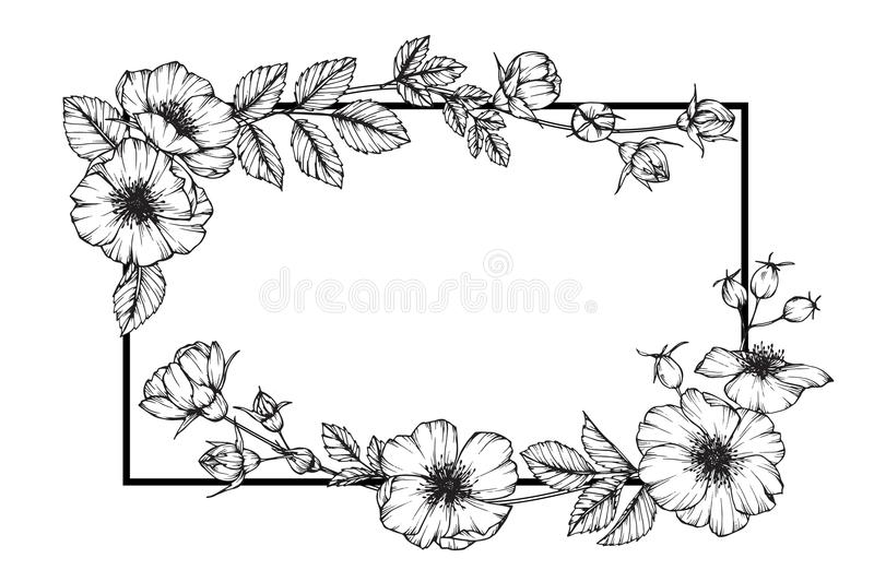 Line Art Design Flower : Wild rose flower frame drawing and sketch stock