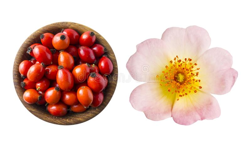 Wild rose flower and fresh rosehip on white background. Top view. Rosehip berries in a bowl isolated on white background. Rose hip berries with copy space for stock image