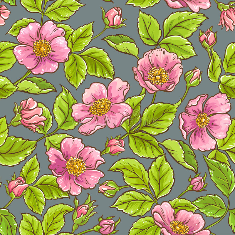 Wild rose flowers pattern vector illustration