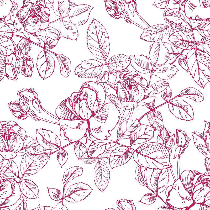 Wild roses plant with flowers in red ink. Hand drawn vector etch style seamless surface pattern. Buds, leaves, stems on. Ink wild rose textile surface repeat royalty free illustration
