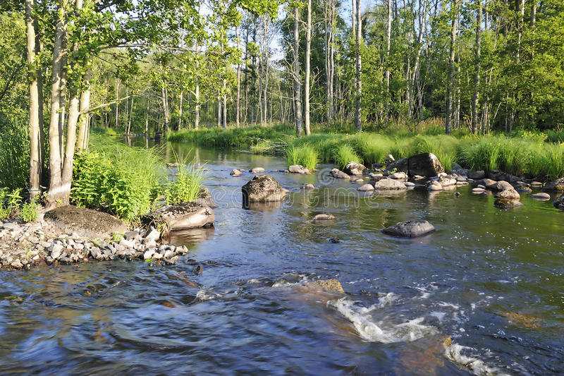 Wild salmon river in Sweden royalty free stock photos