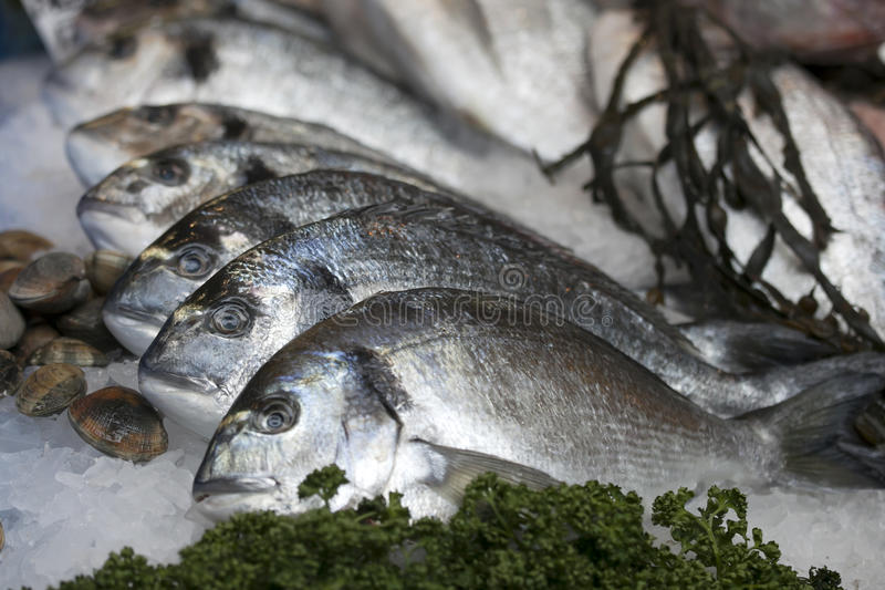 The Wild sea bass for sale at Borough Market, London. Wild sea bass for sale at Borough Market, London stock images