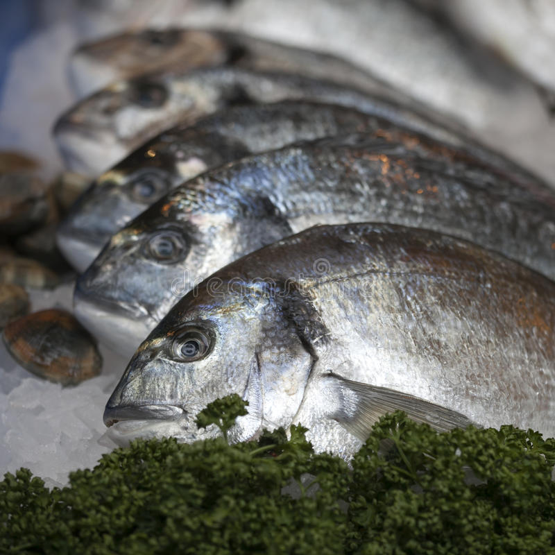 The Wild sea bass for sale at Borough Market, London. Wild sea bass for sale at Borough Market, London royalty free stock photo