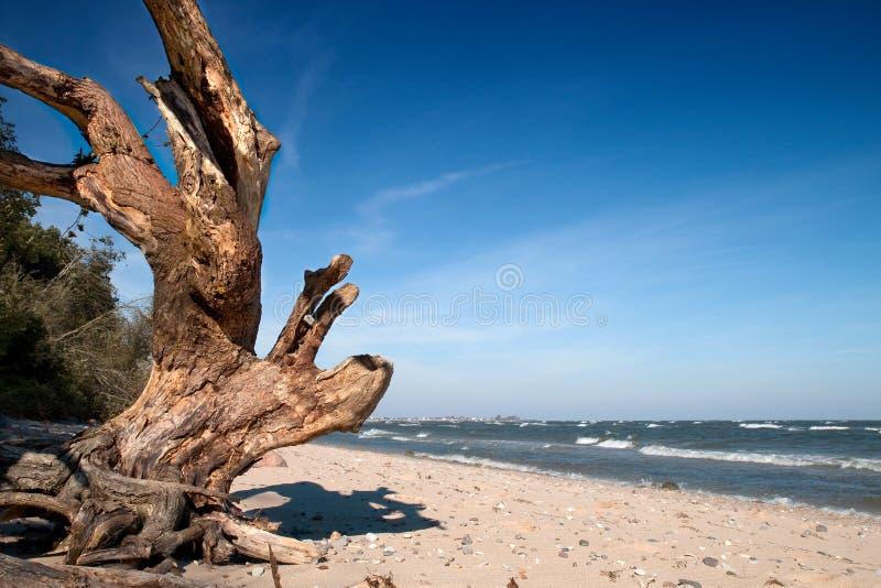 Wild sea beach royalty free stock images