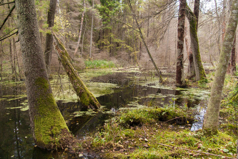 Wild skog arkivfoto