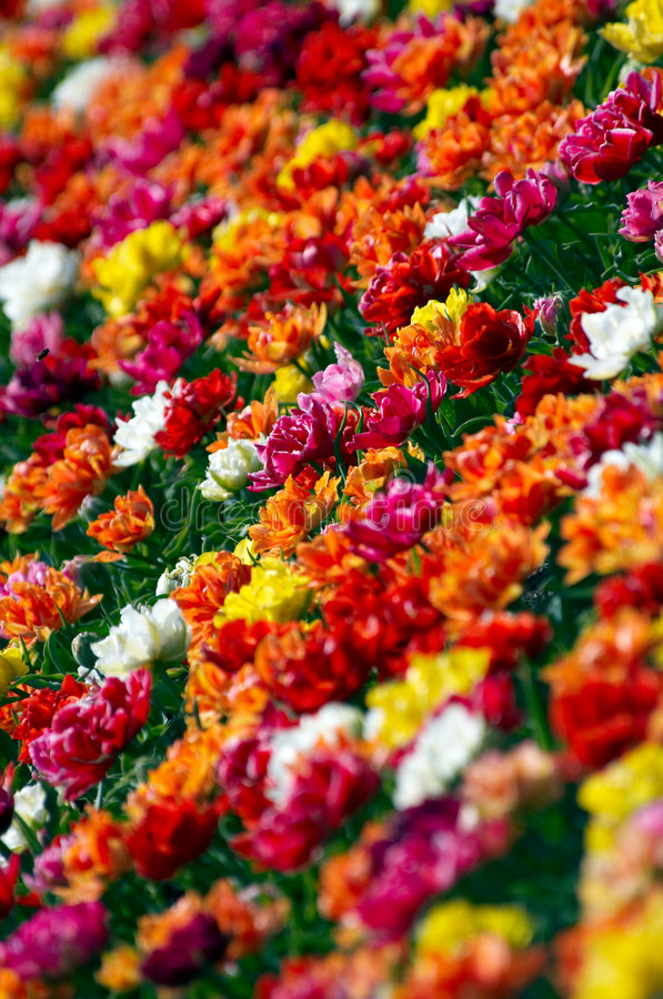 Wild Spring Colors Stock Image
