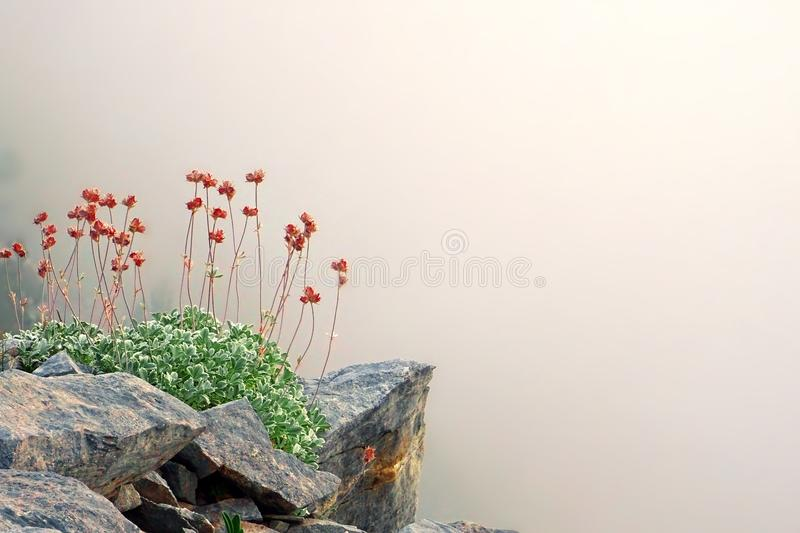 Wild spring flowers in the mythical Mount Olympus, Greece royalty free stock photos