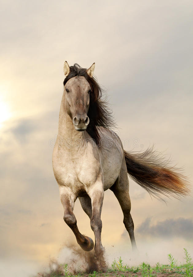 Free Wild Stallion Royalty Free Stock Photography - 25269487
