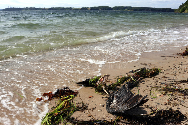 Wild strand arkivbild