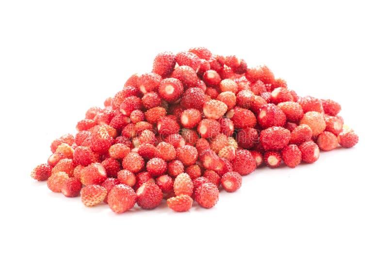 Download Wild Strawberries stock photo. Image of delicious, dessert - 20347936