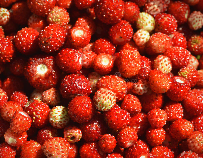 Download Wild Strawberries  Background Royalty Free Stock Photography - Image: 37004747