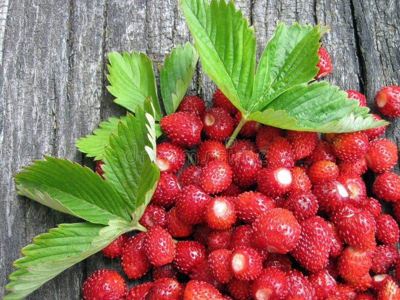 Wild strawberries stock image