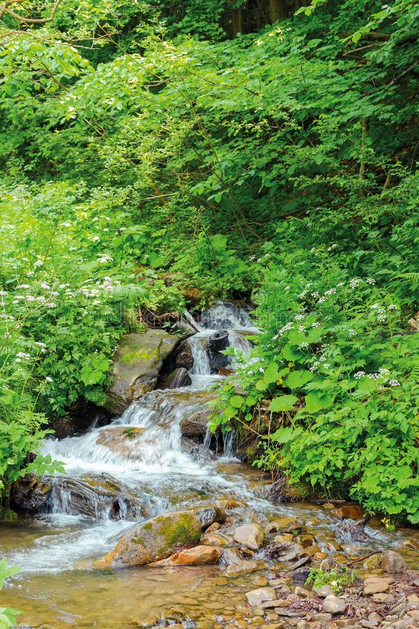 Wild stream in the forest shade royalty free stock photos