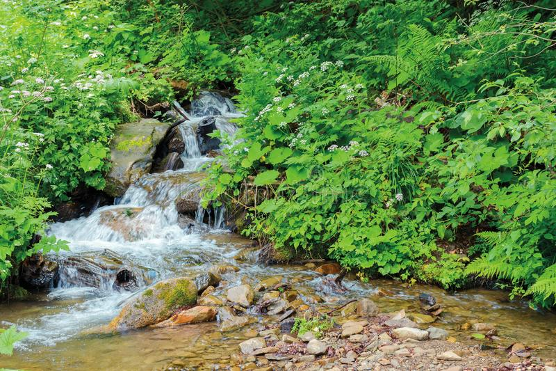 Wild stream in the forest shade royalty free stock image