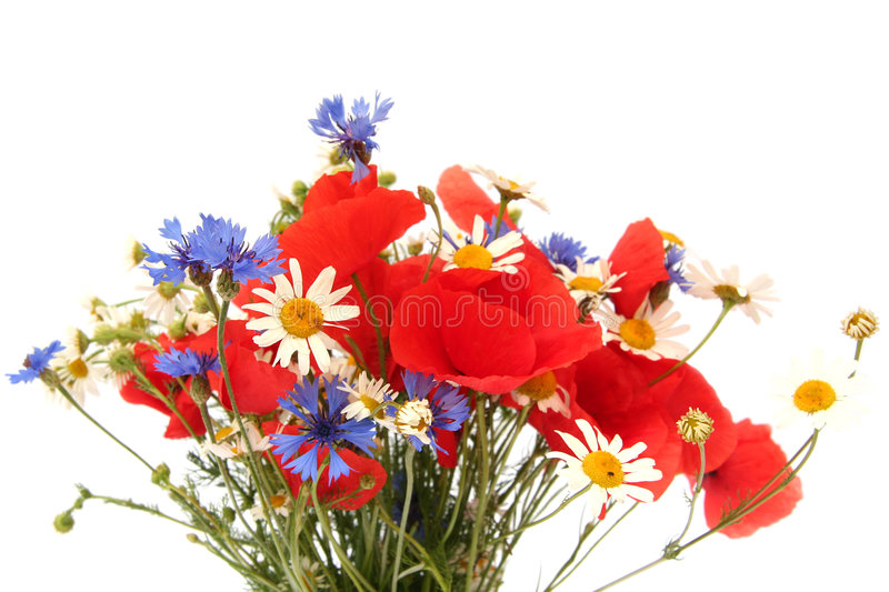 Wild summer flowers stock images
