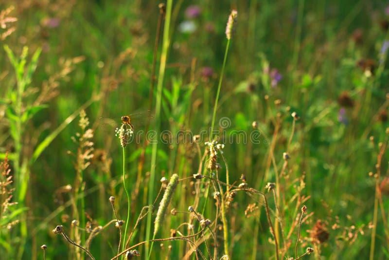 Wild summer meadow stock photos