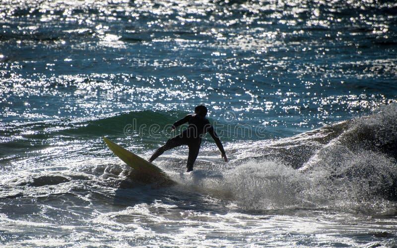 Wild surfare royaltyfri foto