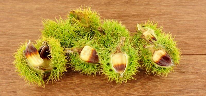 Wild Sweet Chestnuts stock photos