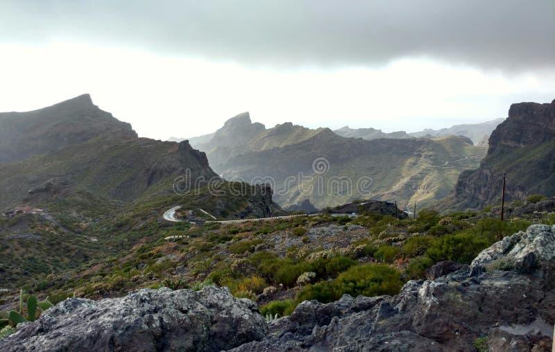 Wild Tenerife stock images