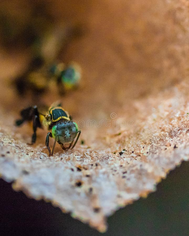 Free Wild Tree Bees In A Bee Hive Stock Photography - 167863182