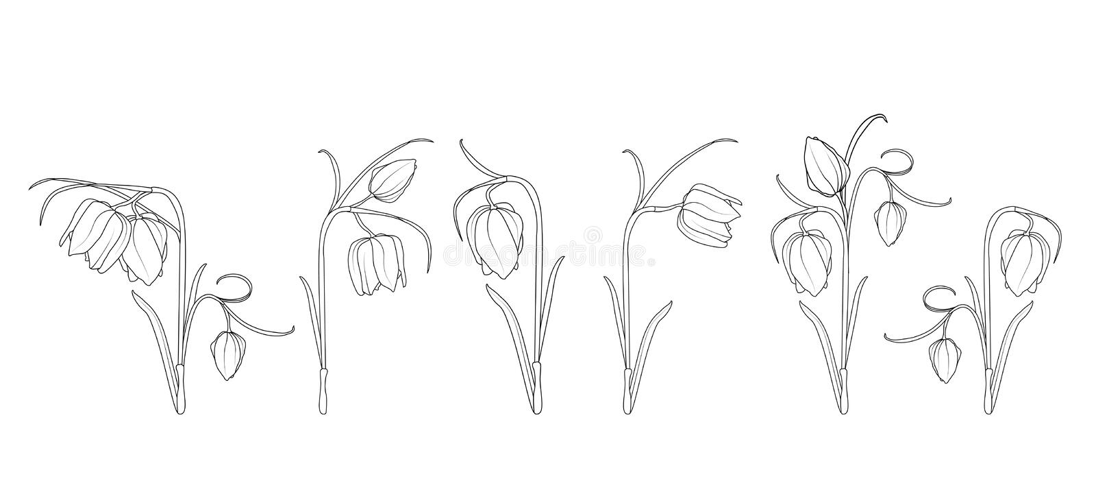 Wild tulip spring flowers black and white engraved ink art. Isolated illustration floral elements collection set. Line design sketch drawing outline royalty free illustration