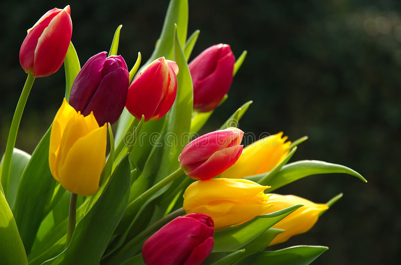 Download Wild Tulips stock image. Image of green, bouquet, pink - 118397