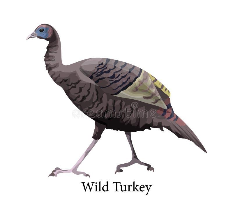 Wild Turkije Ornithologie en fauna Landbouwbedrijfvogel vector illustratie