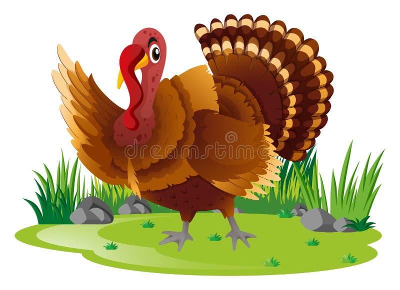 Wild Turkije in tuin vector illustratie