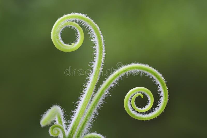 wild växt arkivfoton