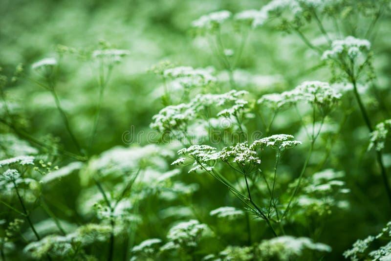 Wild vegetation stock images