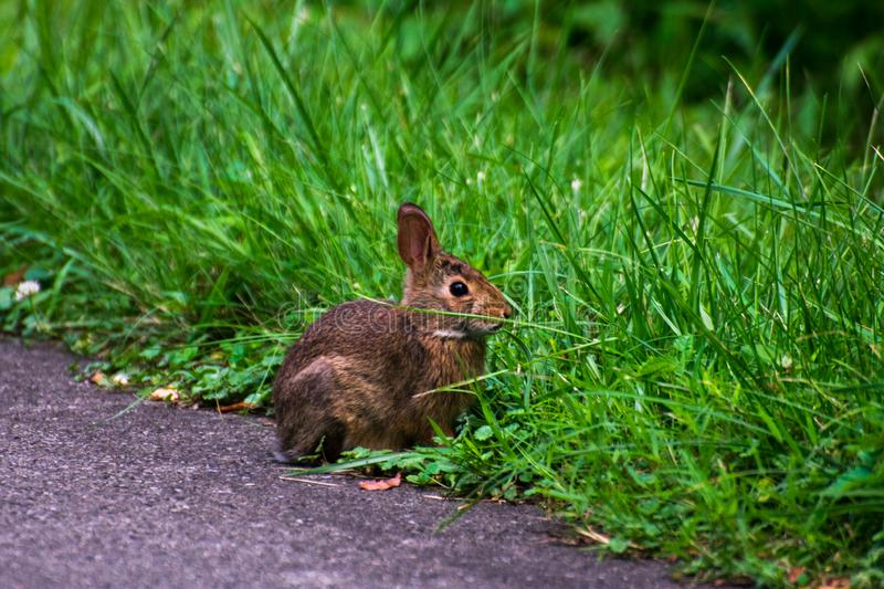 A wild and very cute rabbit royalty free stock image