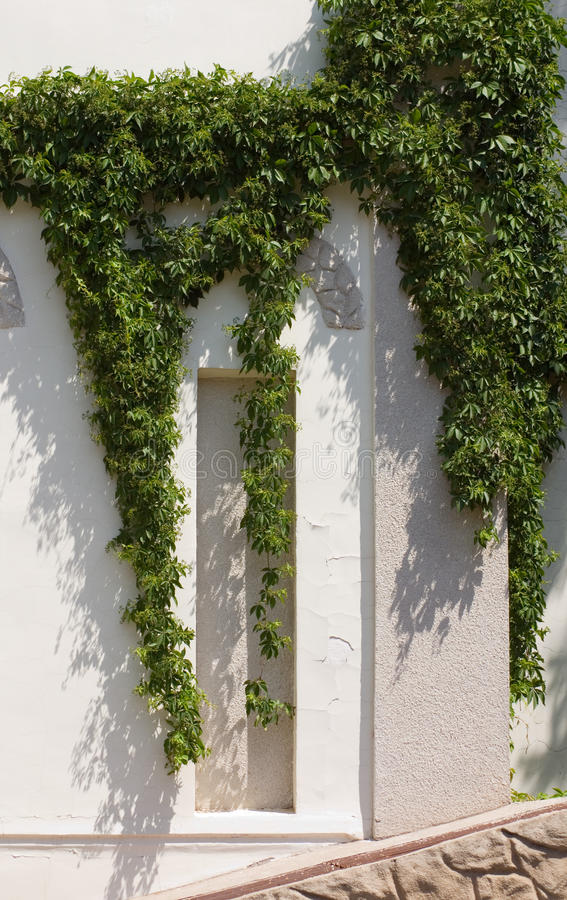 Download Wild Vine Climbing The Wall Of A House Stock Photo - Image of vine, flower: 9855948