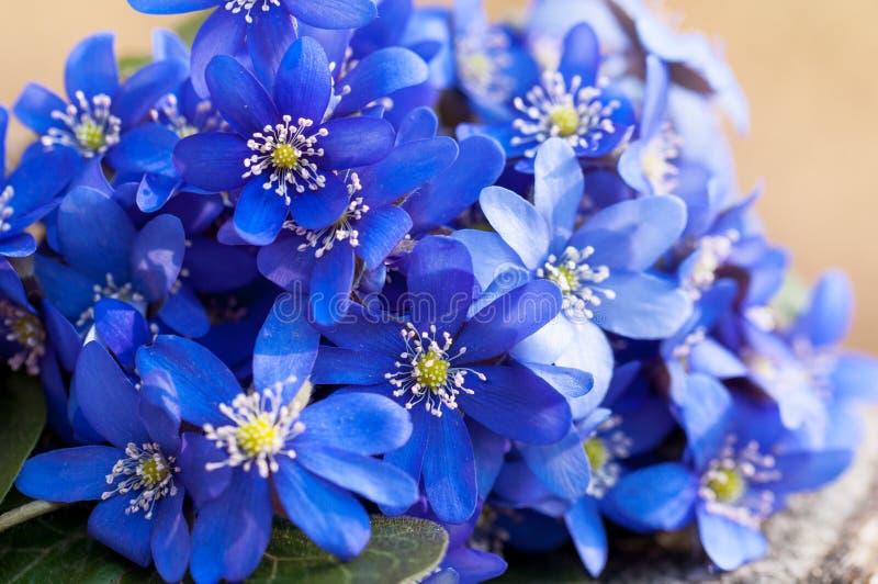 Wild violets bouquet stock images