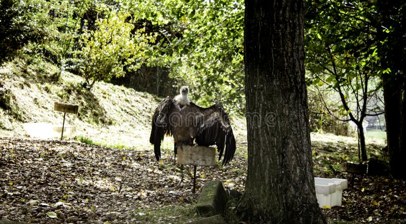 Wild vultures. In nature reserve, mammals and hunters, predatory, wilderness, death, falcon, raptors, spain, protection, europe, wings, eurasian, fly stock images