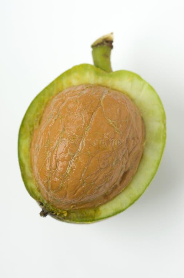 Wild walnut