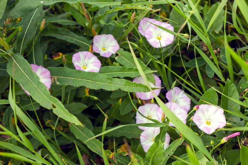Wild wildflowersclose-up Wilde bloemen in een weideaard Natuurlijke de zomerachtergrond met wilde bloemen in de weide in royalty-vrije stock foto