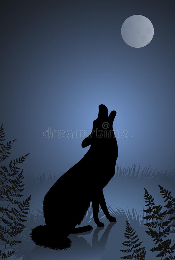 Wild Wolf / Coyote Howling At The Full Moon Stock ...  Wild Wolf / Coy...