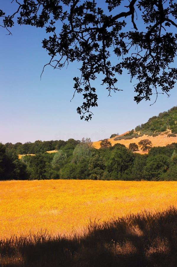 wild yellow för blommaäng arkivfoton