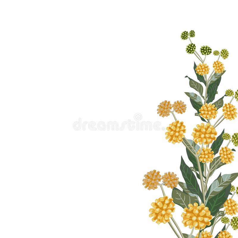 Wild yellow flowers with green leaves. A spring decorative bouquet. Small floral garland. Vector illustration royalty free illustration