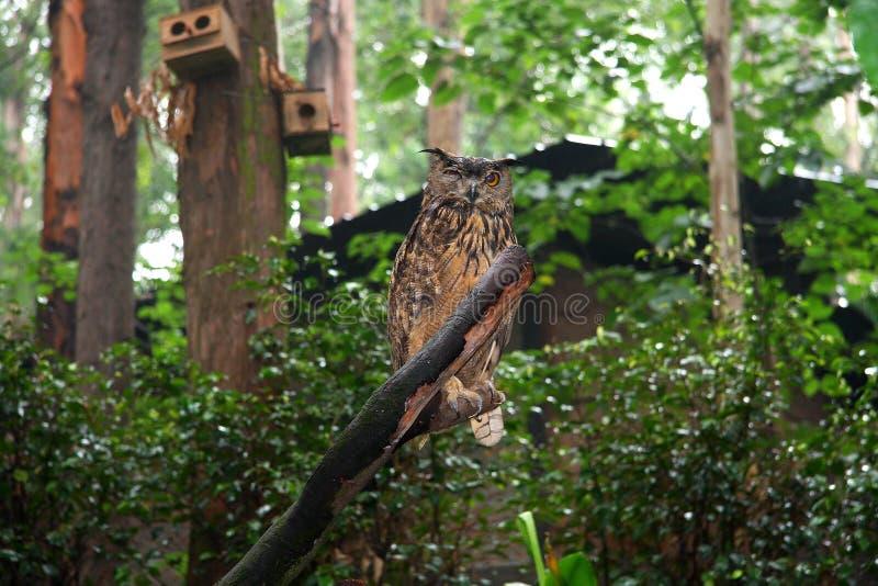 the wild zoo in guangzhou ,guangdong,china stock image