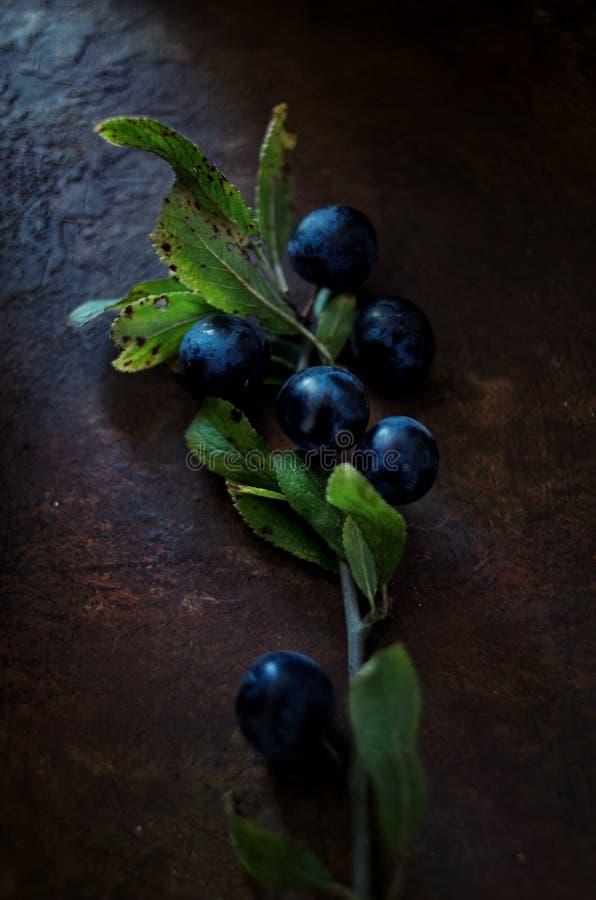 Wildberry photographie stock libre de droits