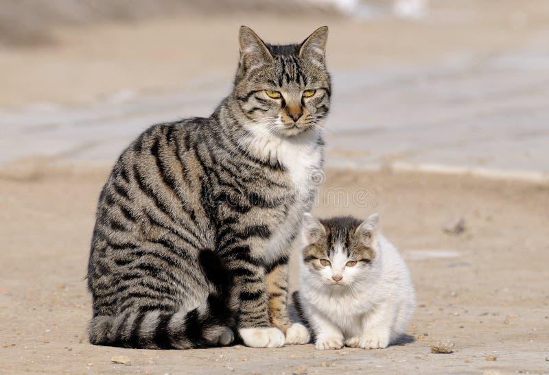 Download Wildcat stock image. Image of colored, cats, wildcat, walk - 7960489