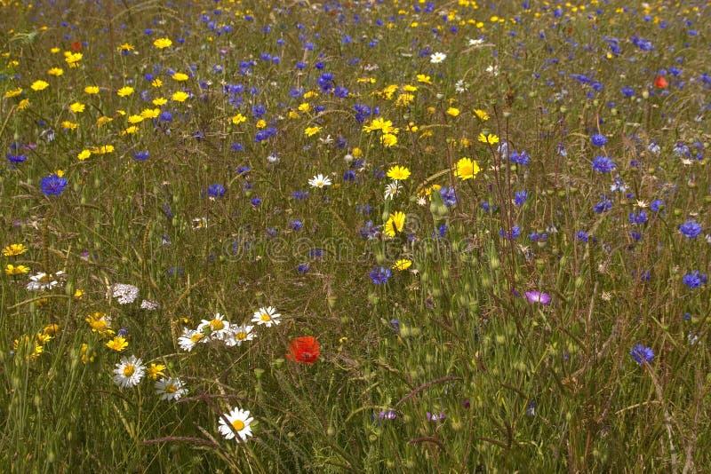 Wilde łąka obrazy stock